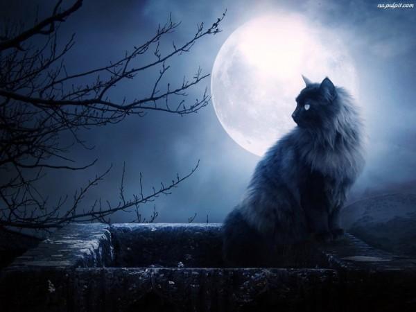Luna kot