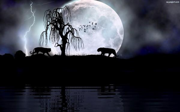 luna ksiezyc-tygrysy-drzewo-noc