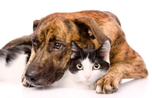 23572874-smutny-pies-i-kot-razem-na-białym-tle