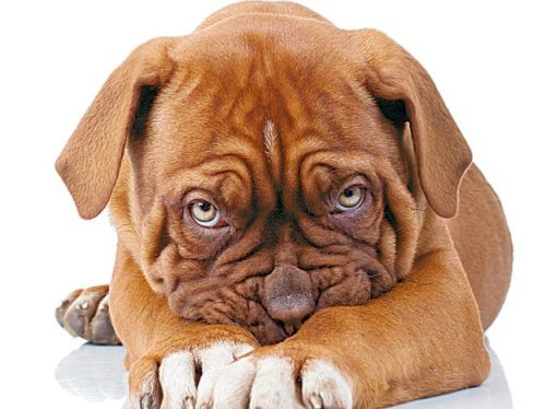 kiedy-pies-sie-obrazi_22605671